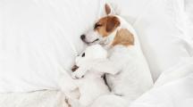 un chien qui fait la sieste dans un lit