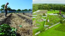 À la ferme de la Bourdaisière, on cultive des plantes qui se protègent entre elles
