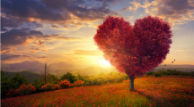 La cohérence cardiaque, l'exercice anti-stress