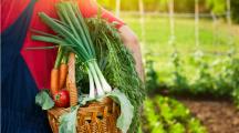 L'agriculture bio en 2017 :  un boom et des risques de pénurie