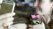 Comment les selfies nuisent aux animaux sauvages ?