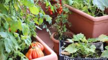 Comment cultiver un potager d'intérieur ?