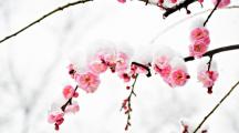 Découvrez les 6 plus belles fleurs d'hiver