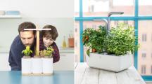 Potager connecté : l'allié des jardiniers débutants et urbains