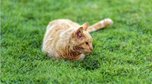 Un agriculteur s'entoure de chats pour cultiver bio