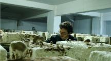 La caverne : des producteurs de champignons bio dans les sous-sols parisiens