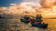 Pêche électrique, entre boycott et légalisation