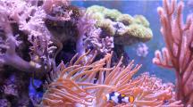 Australie : 500 millions de dollars pour sauver la Grande barrière de corail