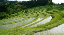 rizière Asie