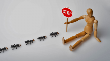 fourmis remèdes naturels