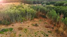 Déforestation, un cimetière d'arbres à Bogota