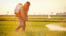 Homme qui pulvérise des champs avec du glyphosate