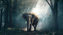 La Terre a perdu 60 % de ses animaux sauvages en 44 ans