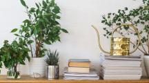Des livres et des plantes