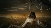 Face au désastre environnemental, les animaux se suicident