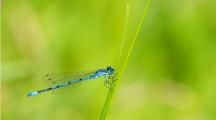 libellule sur herbe