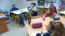Une école invite des chats en classe pour le bien-être de ses élèves