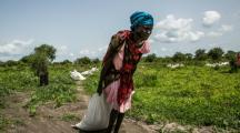 Chocs climatiques et conflits, premières causes des crises alimentaires en 2019