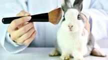 test lapin cosmétiques