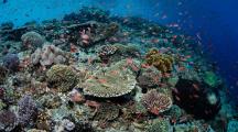 coraux egypte