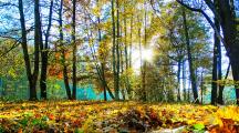 Passer au moins 2 heures par semaine dans la nature aurait des effets bénéfiques sur notre santé