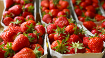 De fausses fraises françaises épinglées par la répression des fraudes