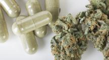Cannabis thérapeutique en France : l'Agence du médicament donne son feu vert