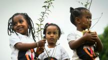 Face au réchauffement climatique, l'Éthiopie plante 4 milliards d'arbres et dépasse un record mondial