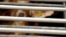Près de 200 personnalités exigent la fin de l'élevage intensif