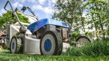 Tondre sa pelouse : un crime contre la biodiversité