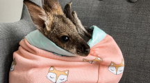 poche tricot kangourou