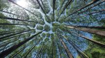 Mois de la forêt