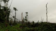 forêt CO2