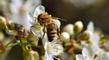zone BZZZ pour protéger les isectes pollinisateurs