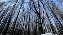 Incendies à Tchernobyl