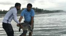 Bangladesh : une course pour sauver des tortues prises dans une marée géante de plastiques