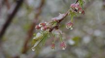gel printemps