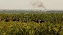 Exploitation de palmiers à huile et déforestation - Indonésie