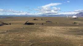 Hécatombe en Islande : une cinquantaine de baleines échouées sur une plage