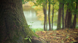 Le temps des arbres, à voir ce soir sur France 5
