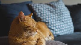Les chats, alliés de notre capital santé!