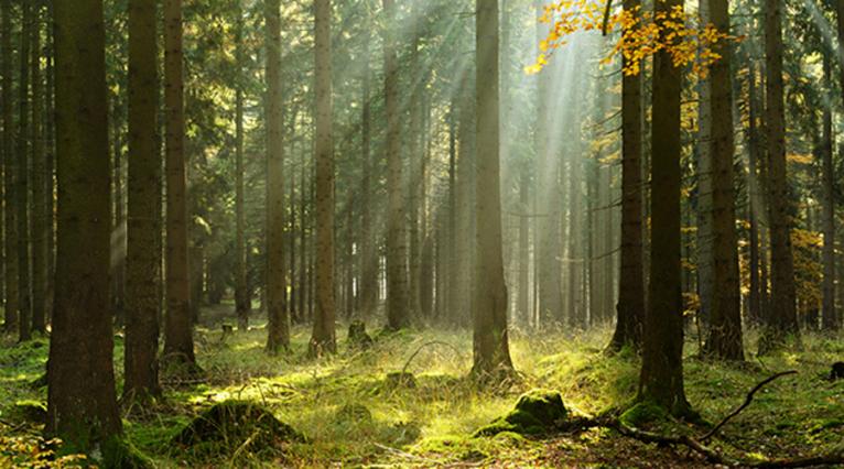 forêt plus vieille du monde