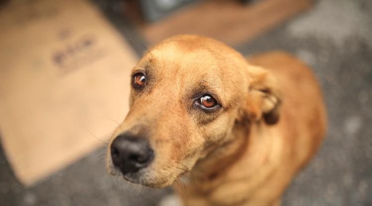 Les associations de protection animale en danger
