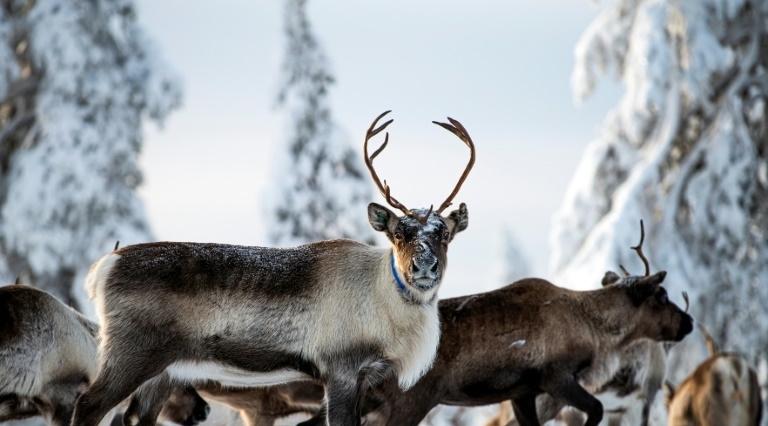 réchauffement climatique Laponie