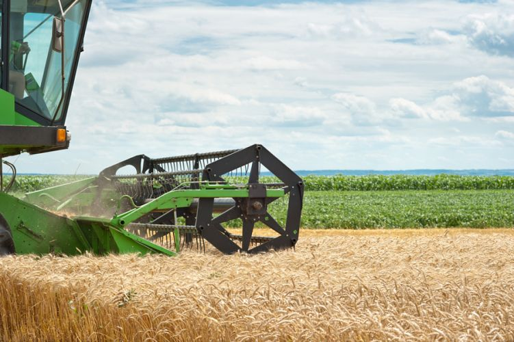 tracteur labourant un champ de blé