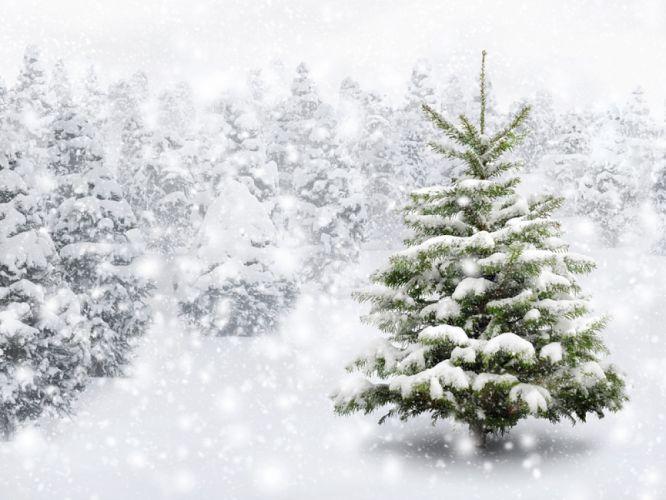 Sapins de Noël sous la neige
