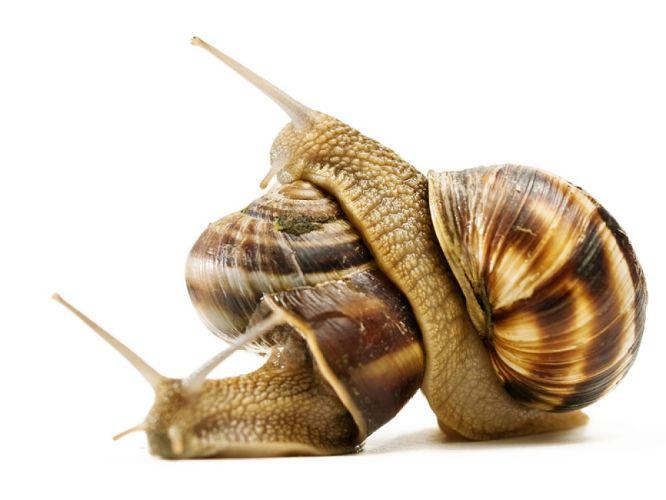 Deux escargots sur fond blanc