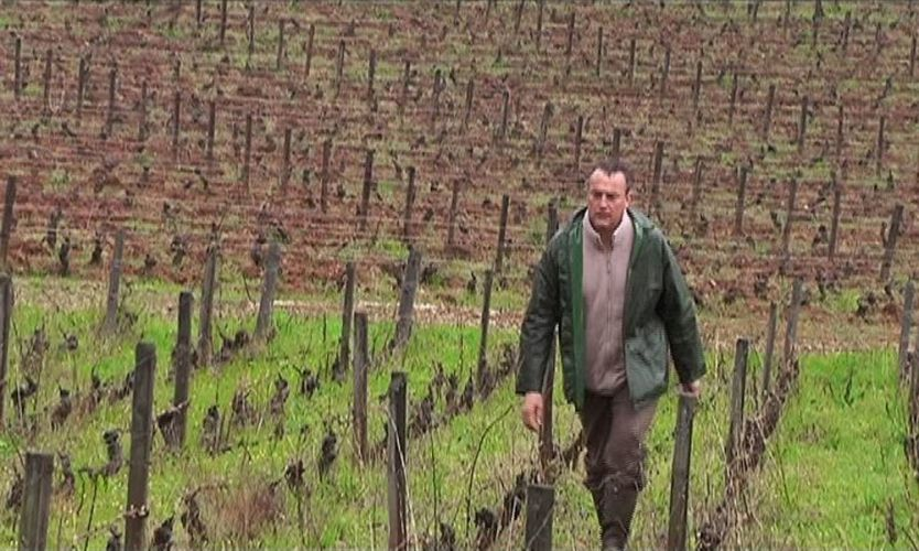 Emmanuel Giboulot marchant dans son vignoble