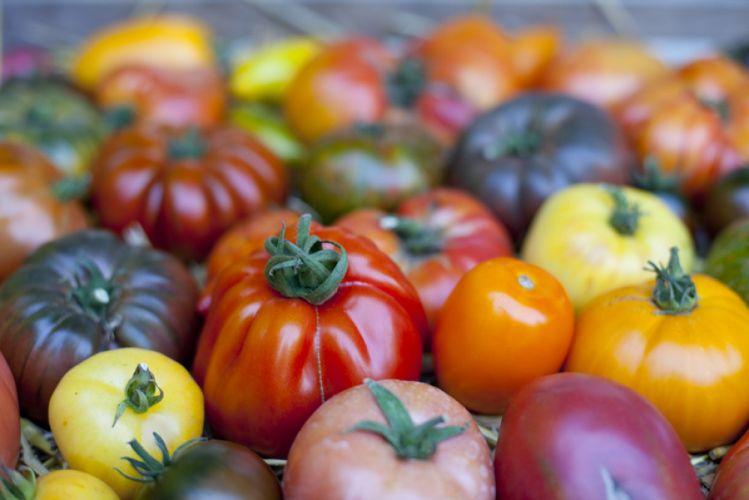 Différentes variétés de tomates étalées