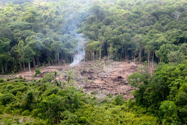 Parcelle de forêt déboisée